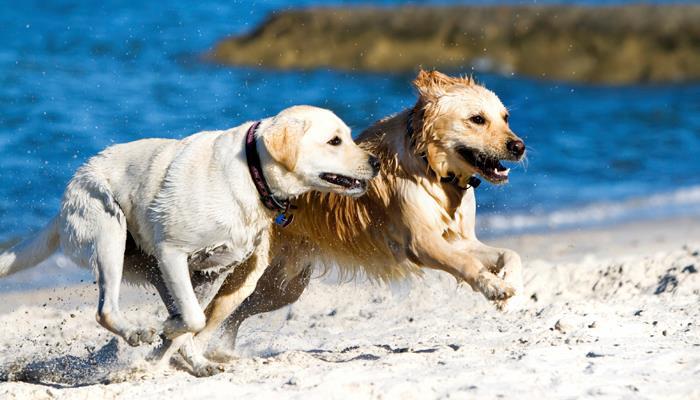 Prana Contest cani